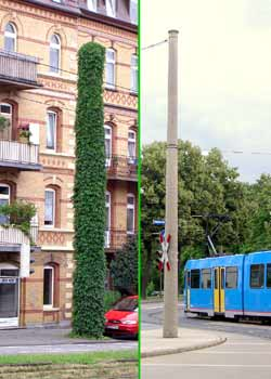 Showing how climbing plants can help reduce visual impact of overhead wire support columns.
