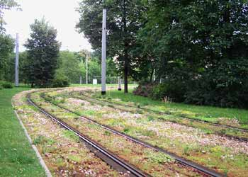 A lawn with the swept path of light rail / tram / streetcar track delineated by flowering plants.