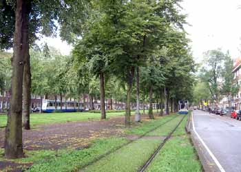 A tree lined light rail / tram / streetcar private right of way alongside a linear park with grass growing between the tracks.