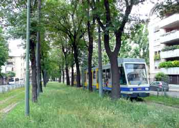 A tree-lined light rail / tram / streetcar private right of way with grass growing between the tracks.
