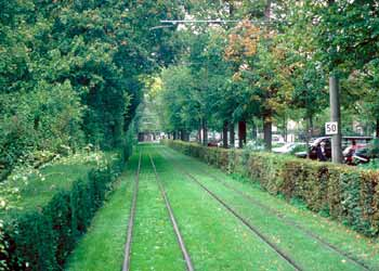Lawn tram track flanked by privet hedges.